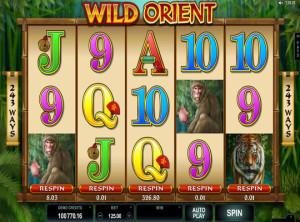 wildorient (3)
