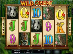wildorient (4)